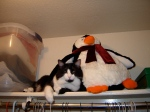 Hanging out with a penguin in our closet